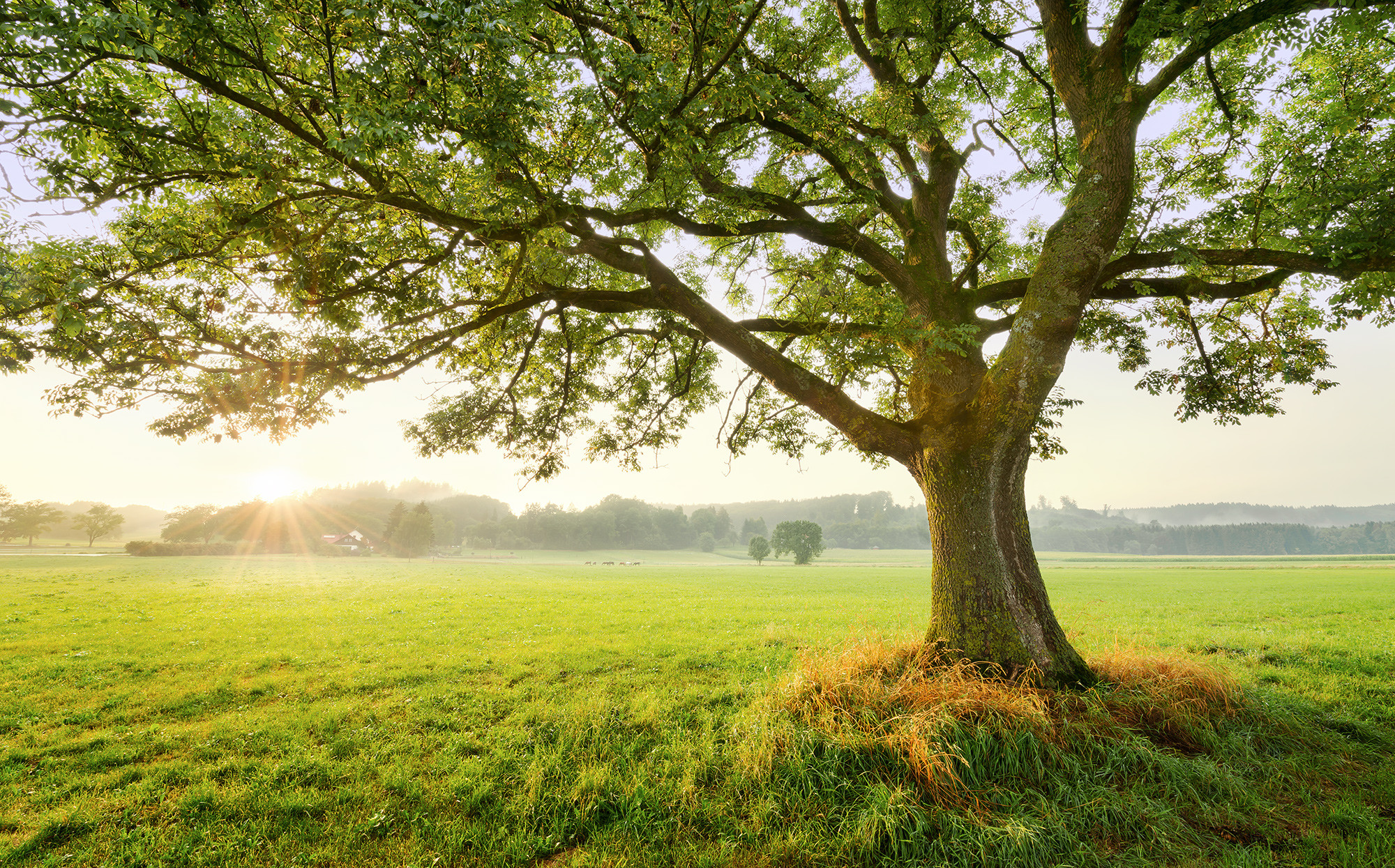 Tree wallpaper digital picture free worldwide email delivery Photo