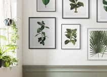 Natur & Pflanzen
