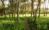 Blütenzauberwald