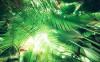 Dschungeldach