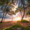 Vertical Paradise