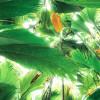 Dschungeldach II