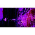 Bubbles Ascending darkblu-pinke