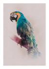 Animals Paradise Parrot