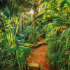 Jungle Trail