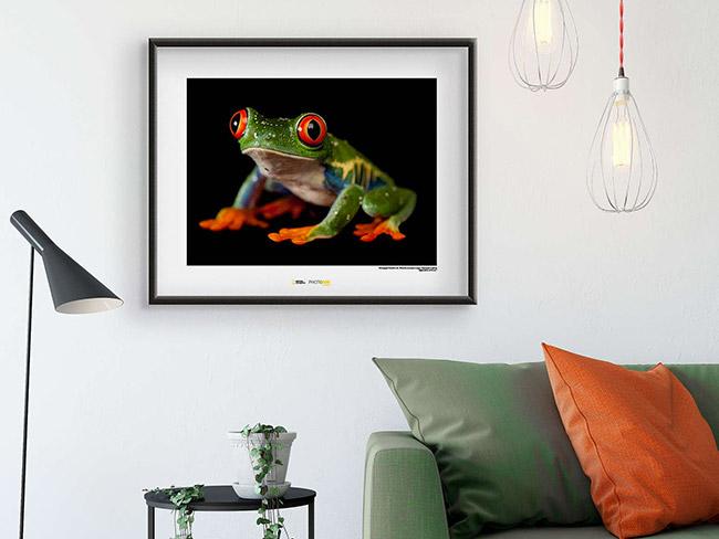 Bilder mit spannenden Aufnahmen von Reptilien und Amphibien, die jeden Tag aufs Neue faszinieren