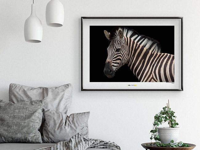 Wandbilder von Komar und National Geographic mit den spannendsten Säugetier-Motiven unserer Erde