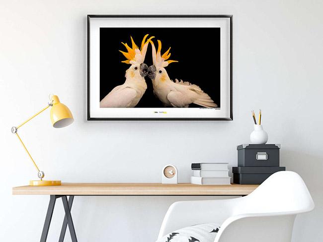 Durch die Wandbilder und Poster mit Vogel-Motiven können auch Komar-Kunden förmlich durch die Lüfte gleiten